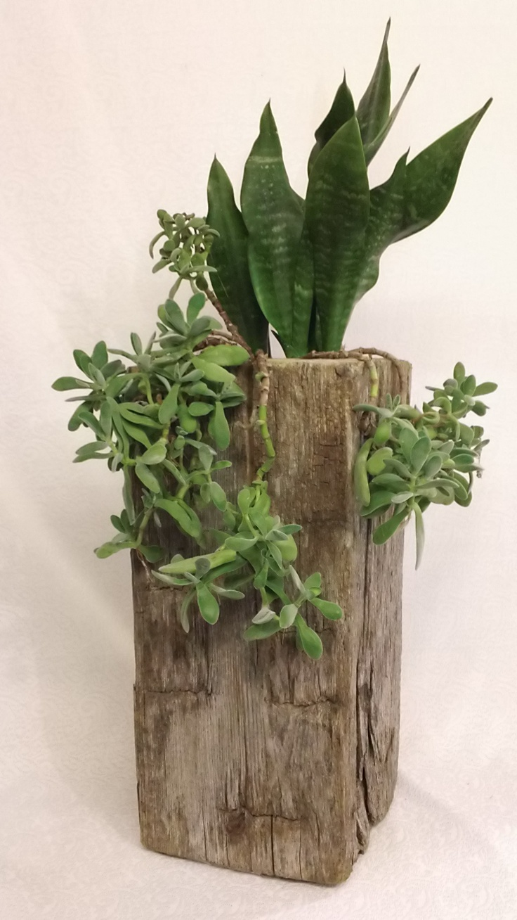 A Planter made from a piece of an old railroad tie.