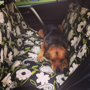 Handmade Dog Car Seat Cover | healthyhappyhearts