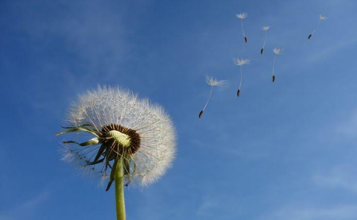 El viento es una fuente para energía eólica