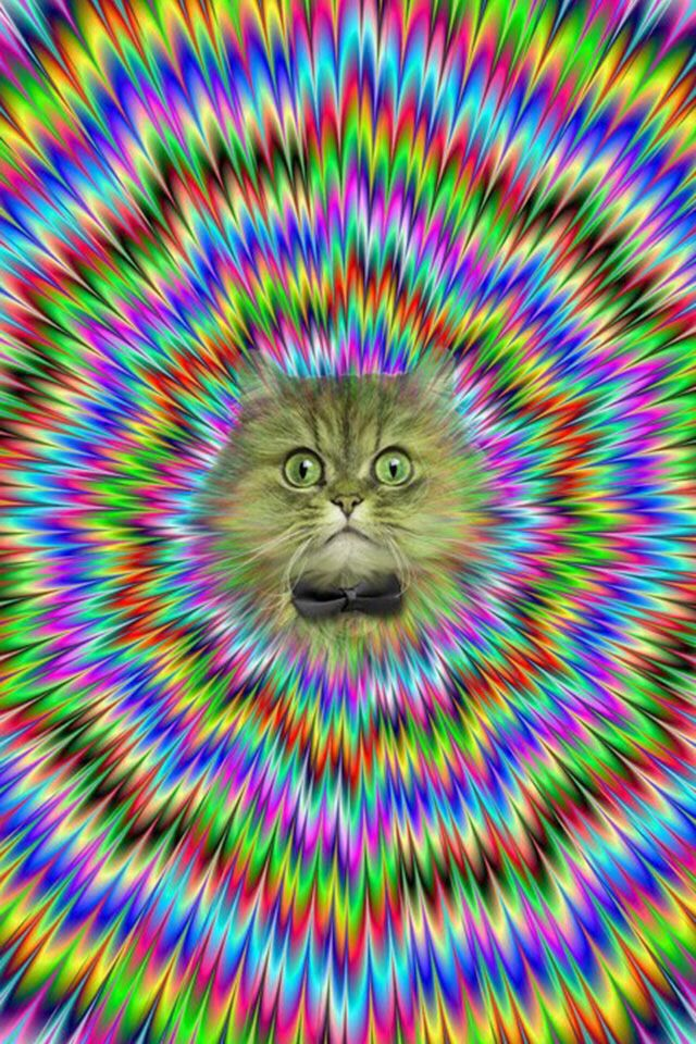 crazy cat wallpaper brain games and illusions