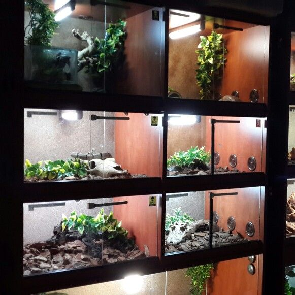 Reptile Collection