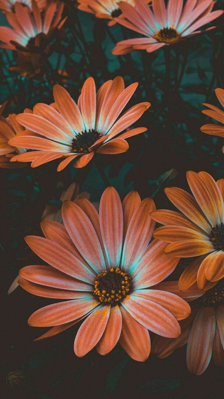Pin By Mona Moni On Fiori Piante Sunflower Wallpaper Flower