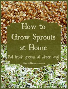 How to grow sprouts at home and eat fresh, crisp homegrown greens all winter long! | Montana Homesteader
