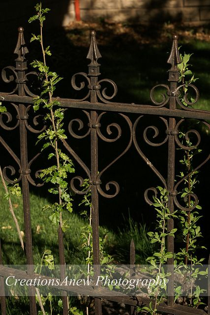 Wrought Iron Fence by creationsanew, via Flickr