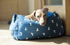 Come togliere l'odore di pipi del cane in casa? Ecco tanti consigli utili per rimuovere l'odore con i rimedi naturali.