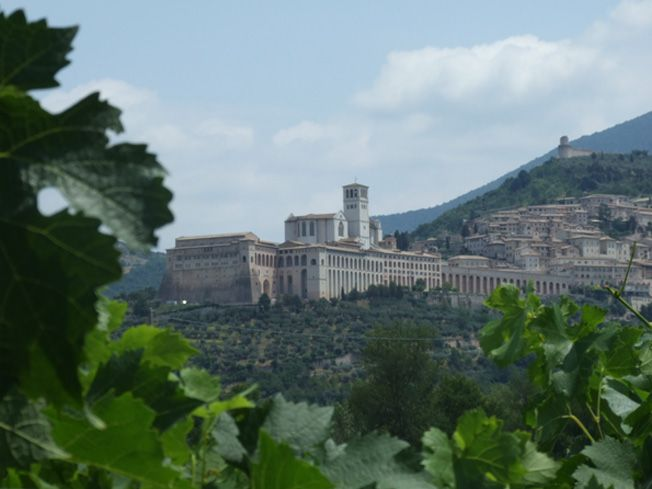 Basilica of Saint Francis view from SAIO Assisi winery