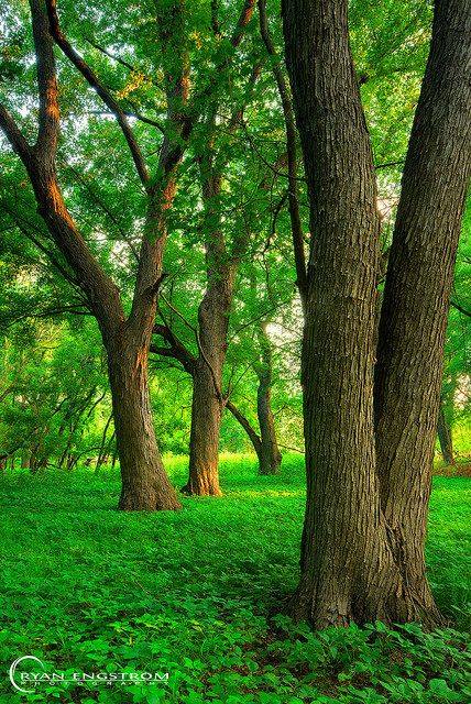 ~~Green Carpet | into the springtime woods, Fort Snelling State Park, Minnesota by Ryan Engstrom Photography~~