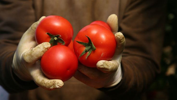Tomatoes have more amazing health benefits than you might realize