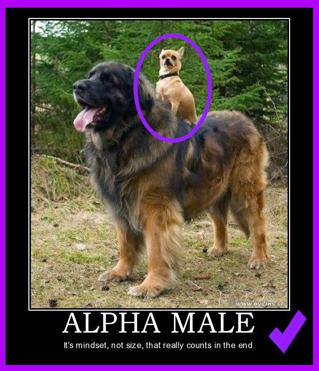 The Alpha Male Oppdag hemmelighetene i denne videoen gave, klikk her >>> https://www.youtube.com/watch?v=c5D5PpZ3XFA  I denne videoen vil du lære hemmelighetene, helt  gave... #macho #hot #rico #sexy #sex #muscle