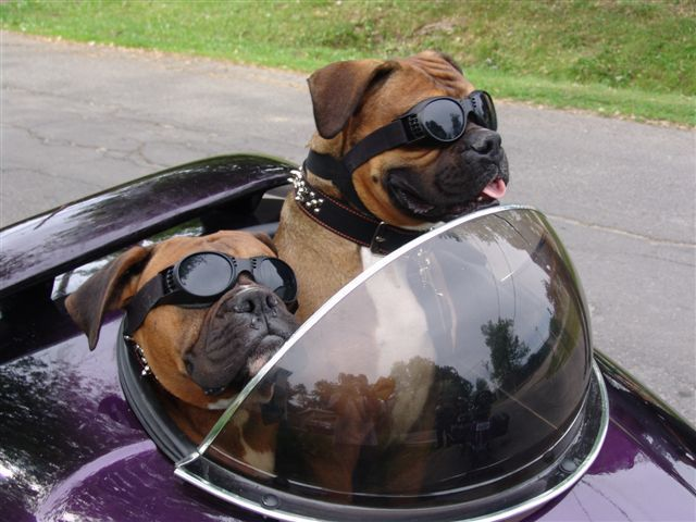 "this pinner wrote..""Oh crap - now there will be no dissuading my husband from getting a sidecar!"""