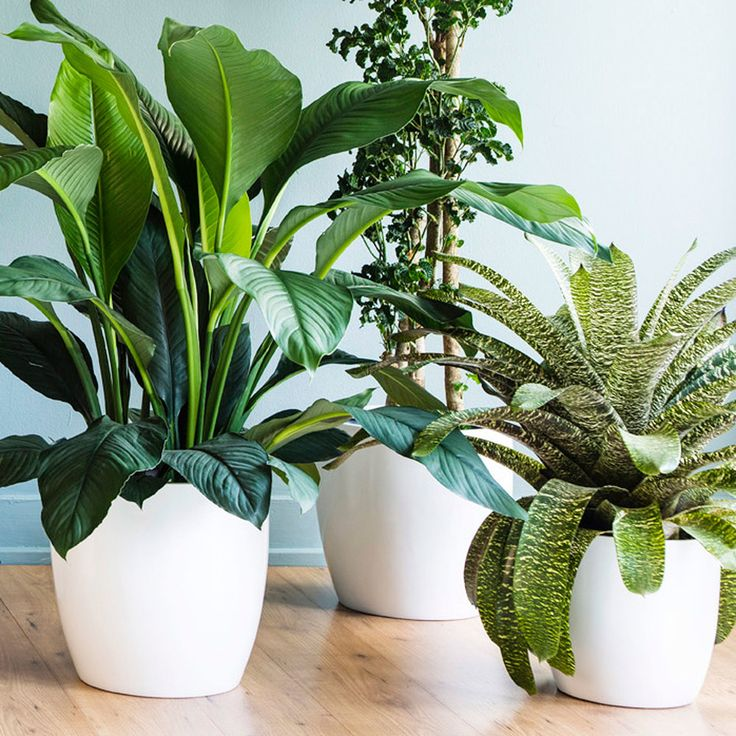 Ultimate Guide To Indoor Plants. Tall PlantsPot PlantsFlower ...