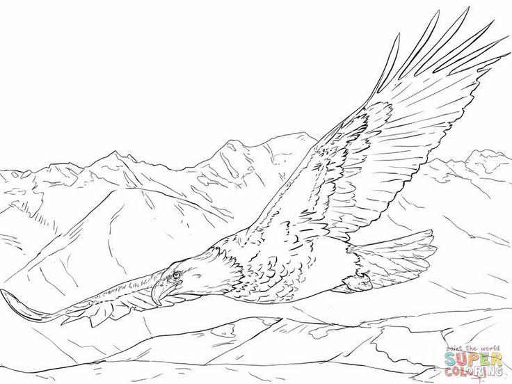 Popular Eagle Coloring Book 47 Coloring Bald Eagle Coloring