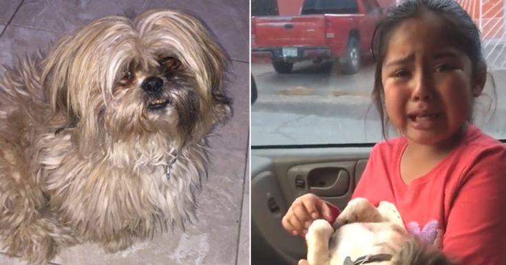 Reacción de una niña cuando ve por primera vez el corte de pelo que le han hecho a su perro #perro #perros #mascota #mascotas #niña #viral #video #videos #schnauzi #noticia #noticias