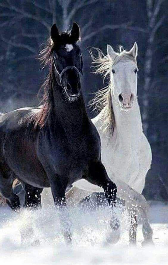 Wunderschönen!!! ♥ ️🐎🏇   – Kraft,Ausdauer Eleganz! Perfektion in hohem Maß!