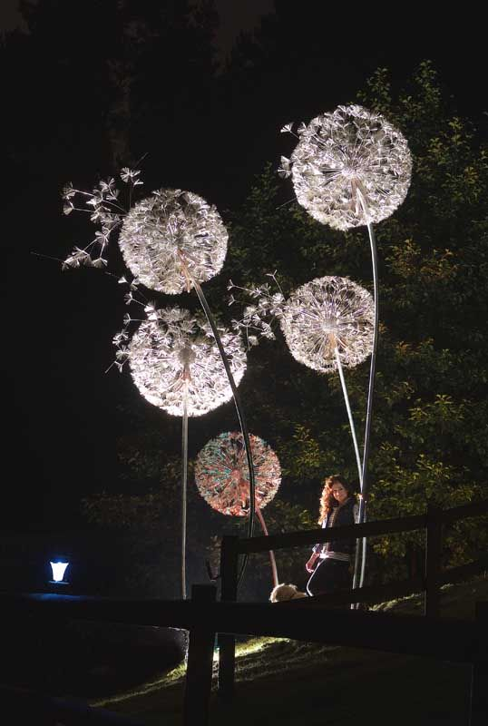 Giant Dandelions. Night