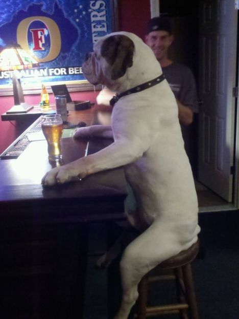 """32 Pictures You Need to See Before You Die"". (Dog at a bar is my favorite.)"