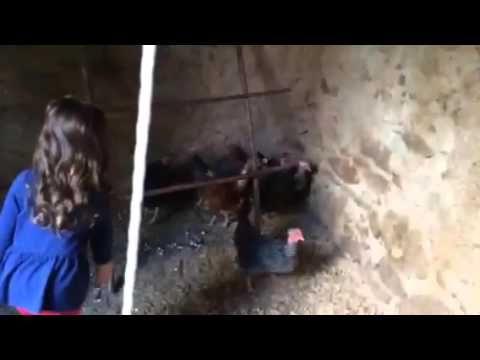Galinheiro AgroProj / Chicken Coop