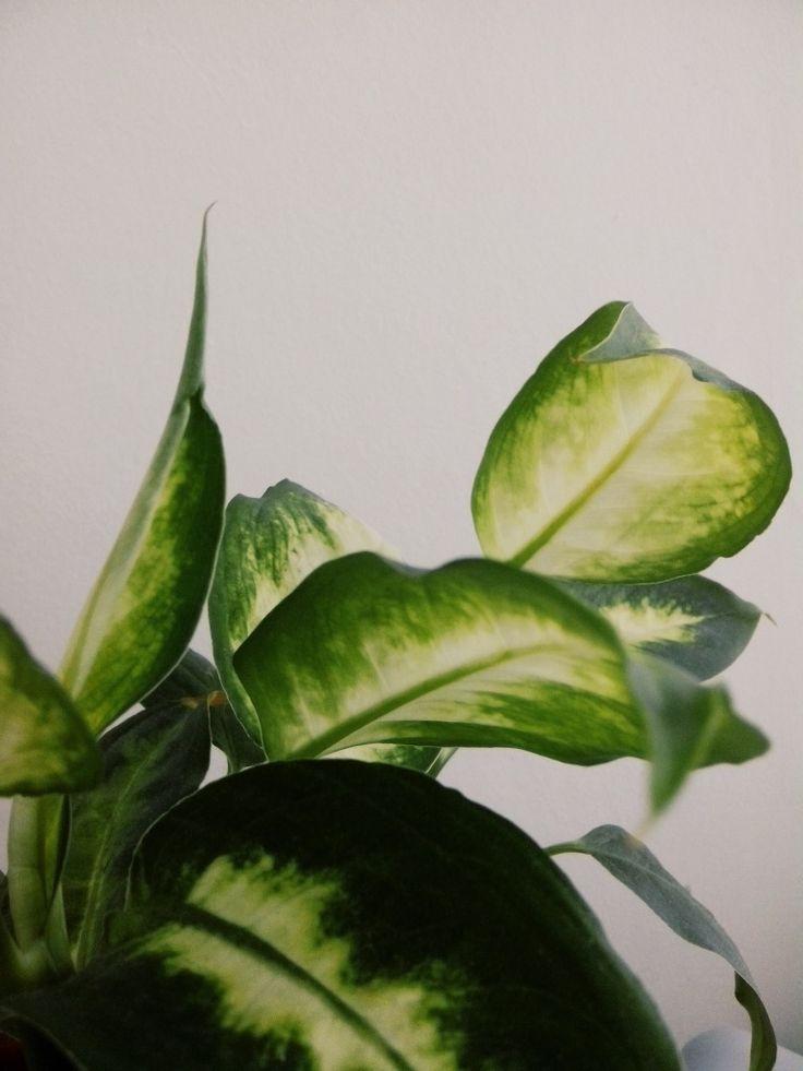 green #plant #vsco #green