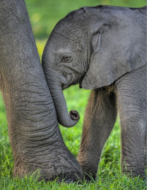 Elephants #elephants, #animals, #travel, https://apps.facebook.com/yangutu
