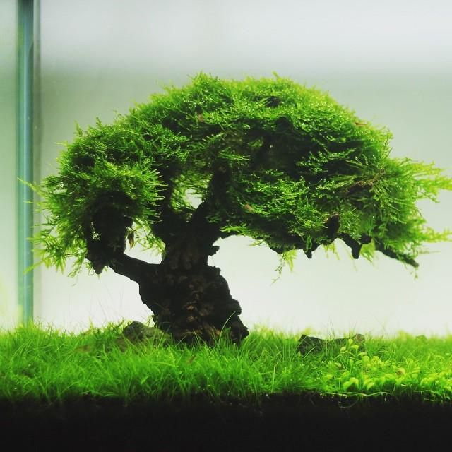Bonsai, Aquascaping And Aquariums