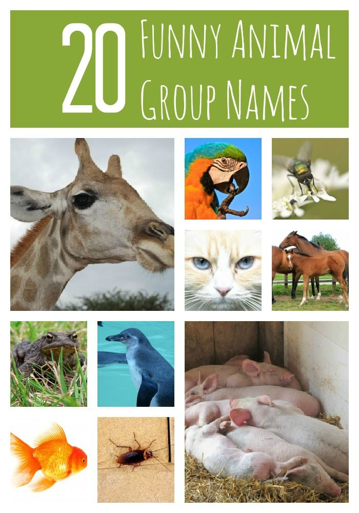 Funny Names For Animals Meme : A murder of crows and other funny animal group names