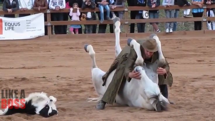 Most Awesome Horse Whisperer Like A BOSS