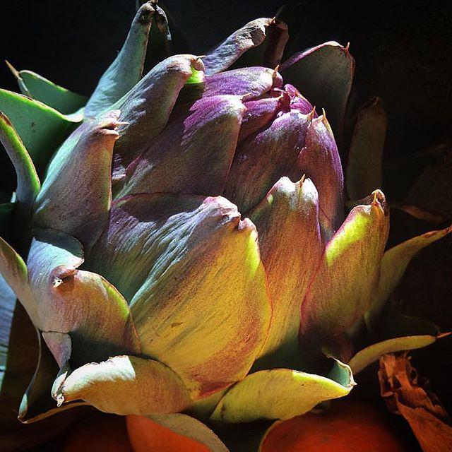@mag.gieshep.herd  Artichoke image captured by @sjwhiteworks #artichoke #plant #vegetable #garden #food #eating #gourmet #study #specimen #botanical #botany #natural #nature #eco#ecology #ripe #leaves #cultivate #study #decor #decorative #green #veggie #lighting  #decor #kitchen