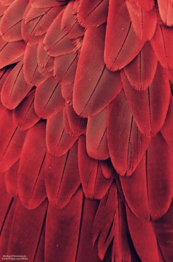 Red | Rosso | Rouge |	Rojo | Rød | 赤 | Vermelho | Color | Colour | Texture | Form | Pattern | Feathers