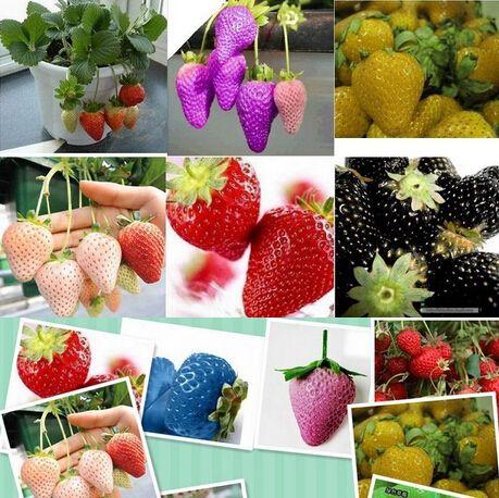 1500 семена 15 видов Клубники Семена Черный, белый, желтый, синий, красный, гигант, оранжевый, pruple, Зеленый сад фрукты завод свободный корабль