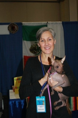 From Mexico, the Xoloitzcuintli (pronounced show-low-eats-queen-tlee ) comes in three sizes – toy, miniature and standard, and two varieties – hairless and coated. Described as calm, loyal and intelligent, the breed makes an excellent companion dog.     It is important that all family members play a role in rearing the Xolo, or it will bond to the one person who takes care of it. The breed is protective and aloof to strangers. Additionally, the coated and the hairless variety of Xolo are very ea