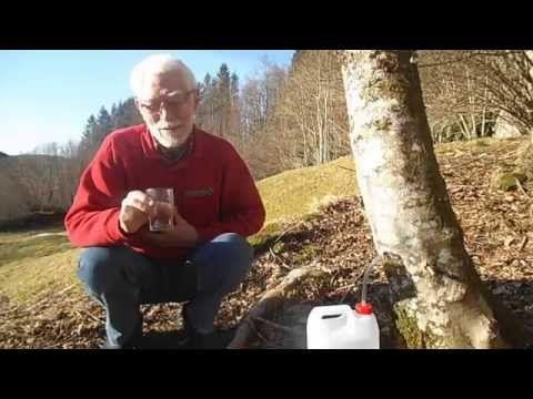 bjorkesevje - Her vil du finne info om tapping av bjørkesevje, som er en morsom og nyttig vårhobby. Du kan drikke den (samme holdbarhet som melk), du kan lage vin av den, og du kan bruke den til å lage styrkedrikk som holder seg lenge. Oppskrifter kommer snart.