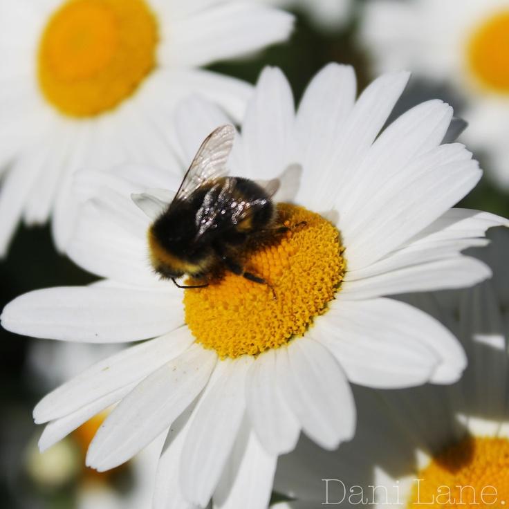 Don't Worry.... Bee Happy.