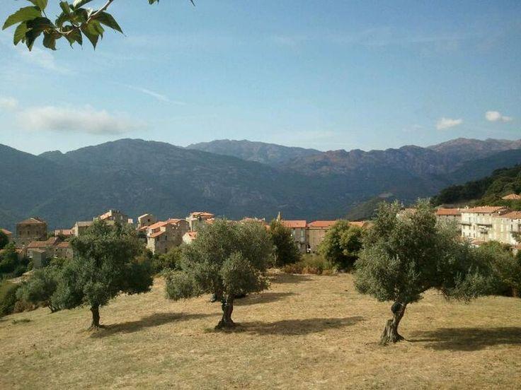 Corsica - L'Alta-Rocca - Sainte-Lucie-de-Tallano est une commune française située dans le département de la Corse-du-Sud. La commune appartient à la microrégion du Tallano dont elle est historiquement le chef-lieu, dans le sud-ouest de l'Alta Rocca.