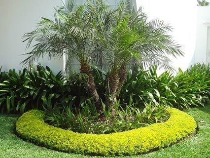 No necesitamos palmeras tan grandes para darle belleza a for Jardines con palmeras