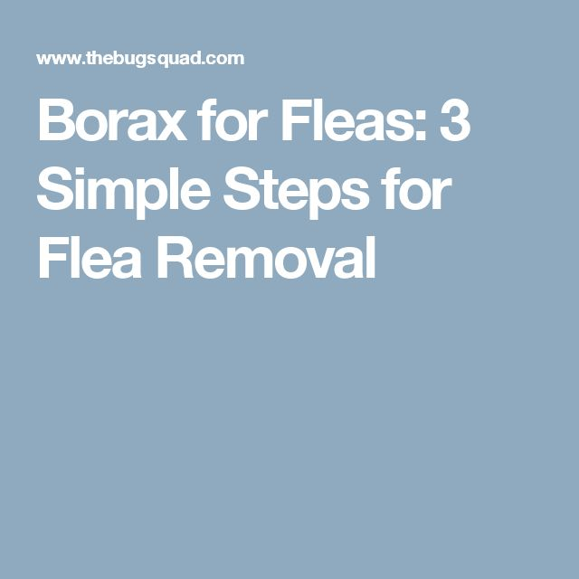 Borax for Fleas: 3 Simple Steps for Flea Removal