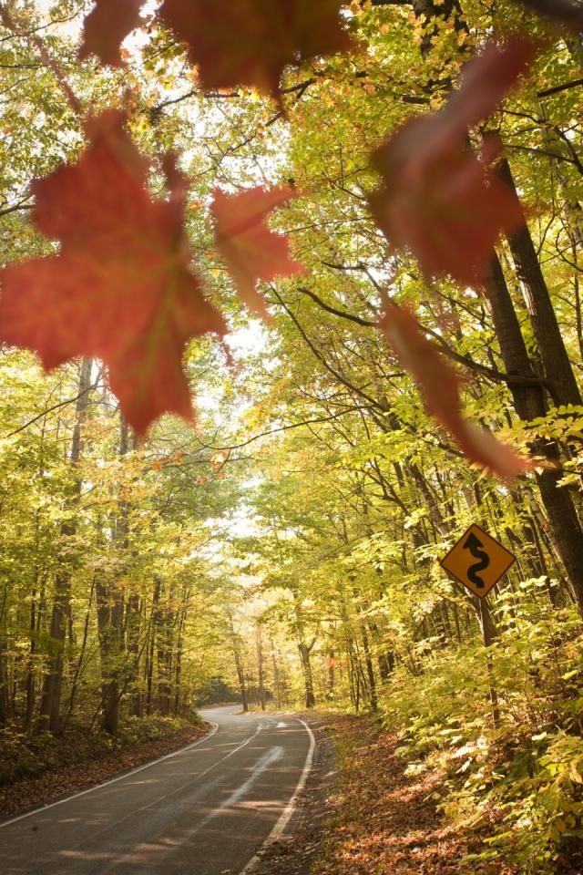 Tunnel of Trees scenic drive in Michigan: One of our readers' favorites! More information: http://www.midwestliving.com/travel/michigan/tunnel-of-trees-scenic-drive-michigan/#
