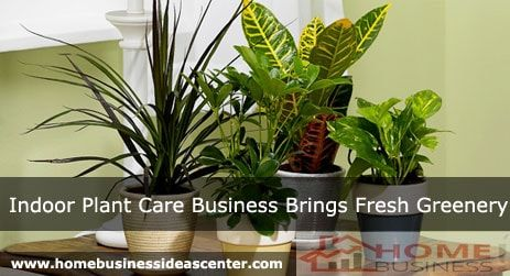 Do you have the love and affection for plants? Then I'm sure you would use several indoor plants for your home décor. Am I right?  Well, if you are obsessed with plants and planning to start a business of your interests, then you can give a thought about indoor plant care business.