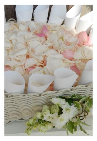 Coni portariso e petali di rosa