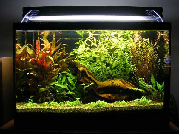 Planted aquarium 20 gallon profile 1000 aquarium for 10 gallon fish tank stocking ideas