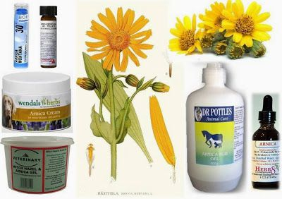 Arnica - Herbs for Dogs and Cats  In this article… 1. Arnica 2.  Health Benefits 3. Cautions 4. Side Effects 5. Drug Interactions