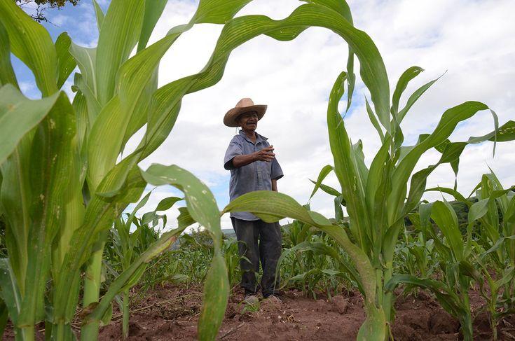Con Peña, dos millones más de mexicanos en la pobreza: Coneval