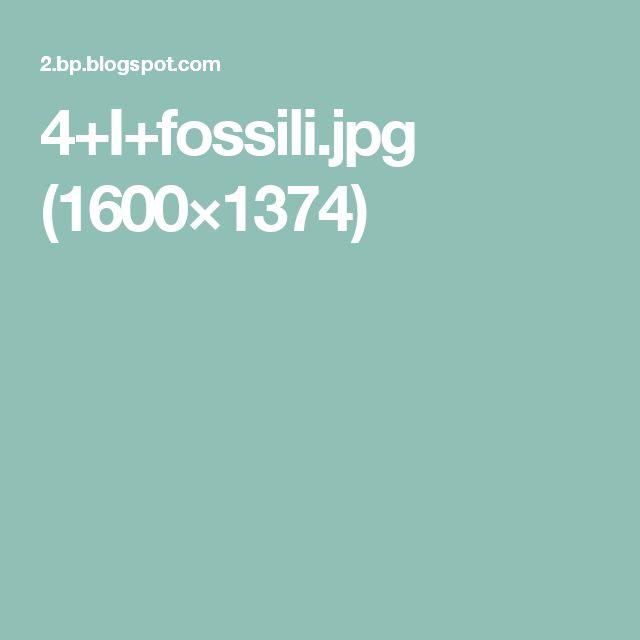 4+I+fossili.jpg (1600×1374)