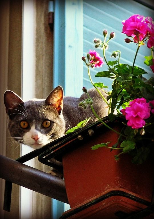 Fresh Cat On Balcony
