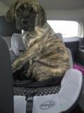 brogan car seat