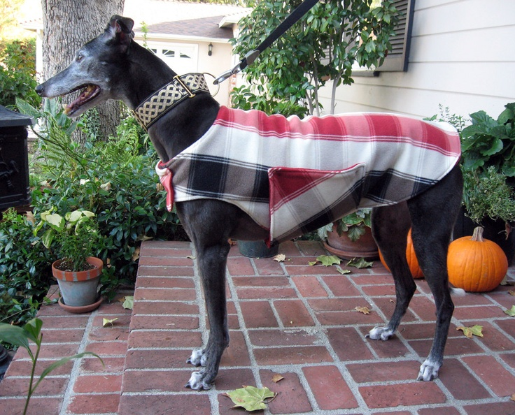 Greyhound Dog Coat, Red, Black, Taupe and Ivory Plaid Fleece with Red Fleece Lining   The Thimble and Hound