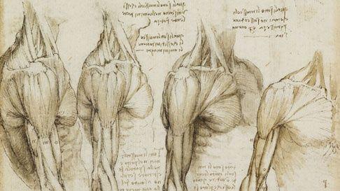 10-Minute Talk - Leonardo: Illustrator of Anatomy   Royal Collection Trust