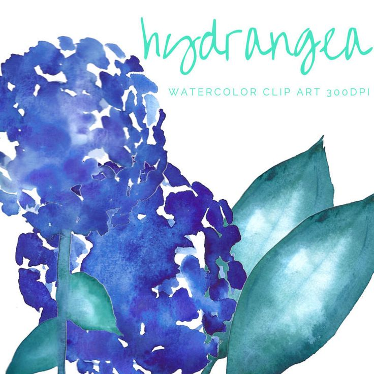 HYDRANGEA Clip Art Watercolor blue green leaves floral clipart flowers wedding invitations scrapbooking original graphics png file 300dpi by theartcitizen on Etsy