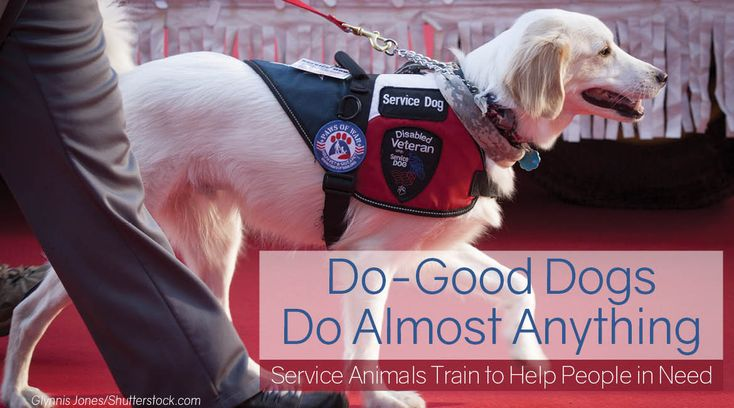 Service dogs help an aging population live full lives in spite of limitations, no matter the size, age or breed of dog. Plus, hundreds of thousands of canines make living with disabilities both possible and more pleasant.