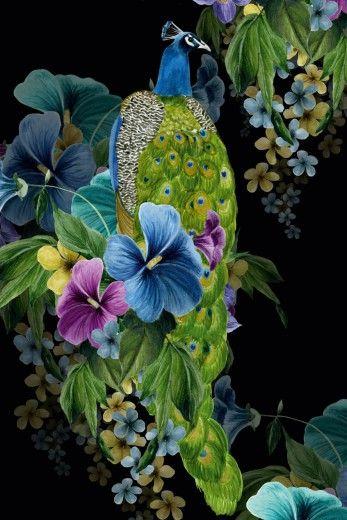 Peacock Flora « Avant card # 16969