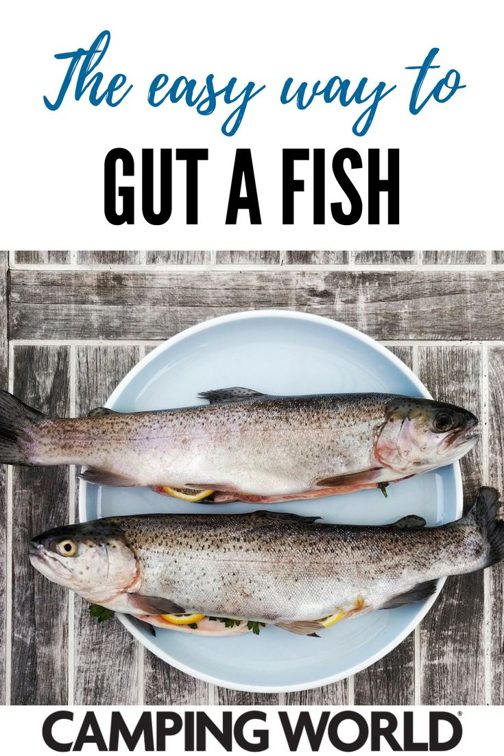 After you go fishing, use this guide to gut fish the easy way. #camping #fishing #outdoors #nature #adventure #RV #RVing #RVLife #camper #camperlife